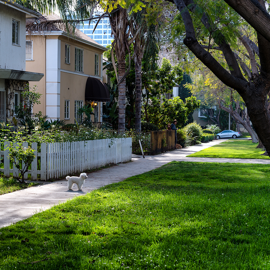 Sidewalk in a residential neighborhood with a dog and people on the sidewalk